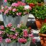 Meilleure jardinière sur pied : Comparatif des meilleurs de l'année